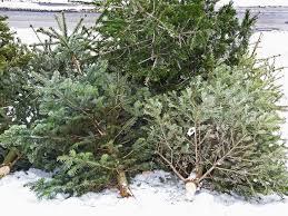 used trees inhabitat green design innovation