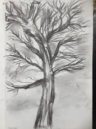 photo collection charcoal drawing trees by