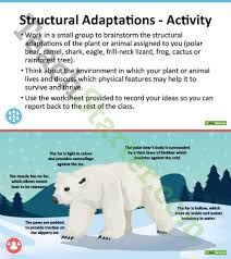 plant and animal adaptations powerpoint teaching resource u2013 teach