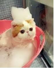 Sho Kucing Anti Jamur 11 merk sho kucing yang bagus agar bulu tidak rontok merk