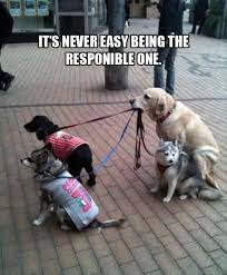 Easy Memes - its never easy dog meme