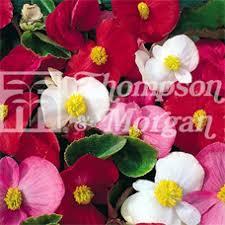 Flower Seeds Online - 19 best kraftseeds buy online flower seeds images on pinterest