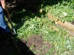 gardening in melbourne the backyard farmer u0027s blog