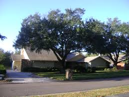 buy live oak trees for sale in orlando kissimmee