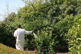 agri turf supplies tree spray