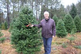 young families on hunt for perfect christmas tree the eastern