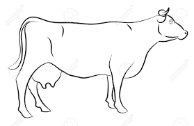 drawn cow black and white pencil and in color drawn cow black