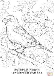 new hampshire state bird coloring page free printable coloring pages