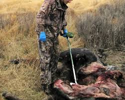 Wyoming wildlife images Undercover investigators solve heinous wyoming wildlife crimes jpg