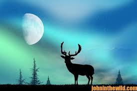 free solunar tables hunting the deer rut and the influence of moon phase john in the wildjohn