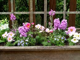 the deck garden hope and flowers spring eternal slow family