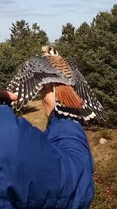 Rhode Island wildlife tours images Rhode island dem rhodeislanddem twitter jpg