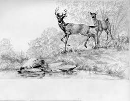 deer pencil drawing u2026 sketches artwork and drawings