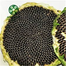 black sunflower oil edible source quality black sunflower oil
