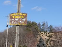 8 places to buy a christmas tree around state college happy valley