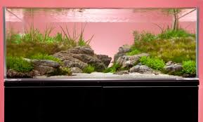 Planted Aquarium Aquascaping A Thoroughly Modern Aquascape U2014 Practical Fishkeeping Magazine