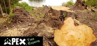 tree removal tacoma lakewood gig harbor