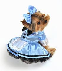 Small Puppy Halloween Costumes 114 Pet Halloween Costumes Images Pet Costumes