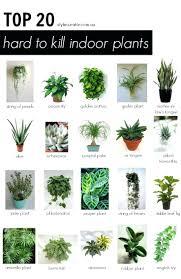 best plant for desk office design best indoor office plants best indoor office plants
