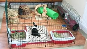 How To Build An Indoor Rabbit Hutch Rabbit Proofing Top 10s