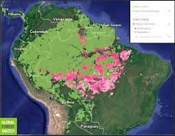 Interactive Map Global Forest Watch by Infographics Maps Music And More November 2016