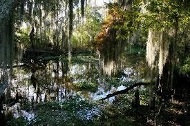 Louisiana National Parks images A louisiana journey through jean lafitte jpg