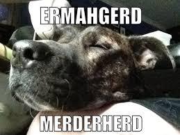 Ermahgerd Animal Memes - betties n brimstone ermahgerd