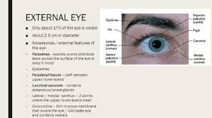 Surface Anatomy Eye Anatomy Of The Eye U0026 Ear Exercise 21 22 The Eye Ppt Download