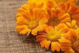 imagenes flores relajantes flores de naranja tratamiento spa relajante terapéutico fotos de