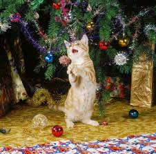 cat in front of tree decoration sets