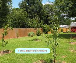 an orchard big or small is a lovely idea a cultivated nest