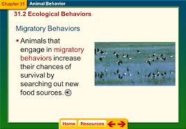 chapter 31 animal behavior ppt video online download