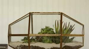 how to make a terrarium southern living