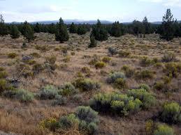 central oregon native plants oregon badlands wilderness wikipedia