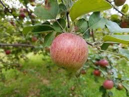 Parkers Maple Barn Hours Currier Orchards Home Facebook