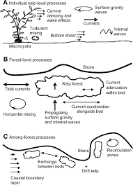 roles of transport and mixing processes in kelp forest ecology
