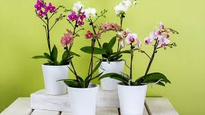 when to prune native plants pruning your orchid plants best tips to follow youtube