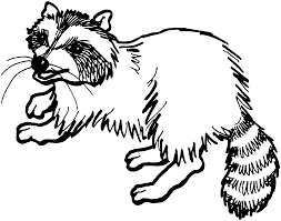 free raccoon coloring pages