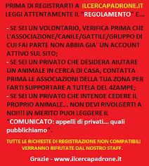 cani in cerca di casa ilcercapadrone it il primo canile on line d italia cani e gatti