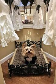 Dog House Interior Miniature Yorkshire Terrier A Luxury Dog House With A Mortgage
