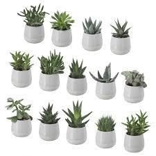 plante verte chambre à coucher plantes depolluantes pour chambre coucher vertes plante verte une