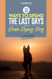 15 ways to spend last days with your dying minimize the