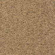 Free Estimate Carpet Installation by Carpet Carpet Installation Free Estimate Empire Today