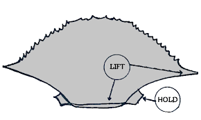 scottsbt com shedder crab demo sketch