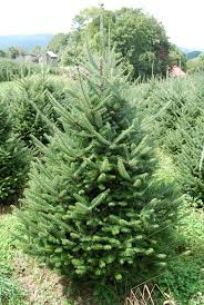 christmas fresh christmas trees artificial or living modernize