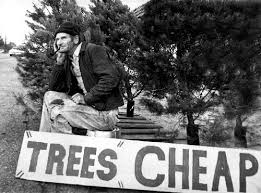 teaching should it really be like selling trees