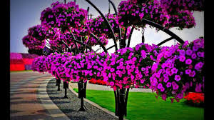 miracle garden dubai by m e chidiac photography youtube
