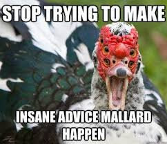 Advice Meme Generator - advice mallard meme generator mallard best of the funny meme