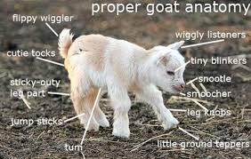 Funny Goat Memes - the best goat memes jokes and puns