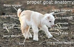 Joke Memes - the best goat memes jokes and puns